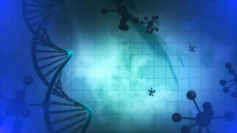 Wie Neurotransmitter das intermittierende Fasten bestimmen